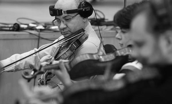 Violins-13